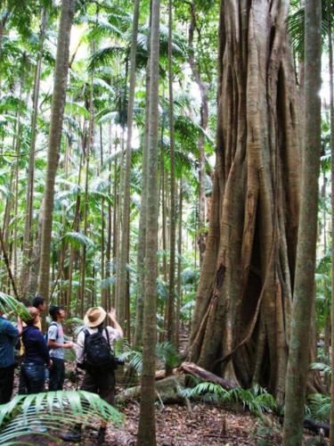 Bne club50 Groupinrainforest